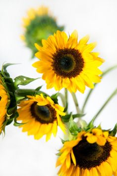 ☼ Here Comes The Sun ☼ Sunflowers ☼