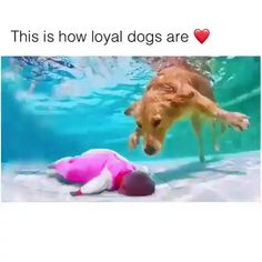 i love dogs This is how loyal dogs are Cute Puppies, Cute Dogs, Dogs And Puppies, Maltese Puppies, Doggies, Cute Little Animals, Cute Funny Animals, Funny Animal Memes, Funny Dogs