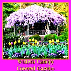 A current trend on Pinterest is gardens.  Love working in my yard and building special spots to sit and play. Would love to have this wisteria canopy covered gazebo in my yard.  For Pinterest tips sign up for our Pinterest eNewsletter by clicking on pin.