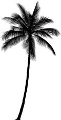 Palm Tree vector art illustration