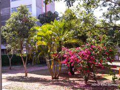 UPIS_FOTO_042016_ATIVIDADE 03_FLORES 7