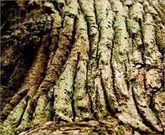 Oak-Texture