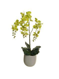 Phaleno In Vaso Di Vetro 63 cm Verde su Amazon BuyVIP
