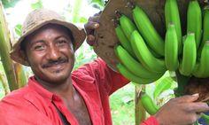 rainforest alliance farmer