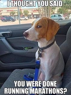 Everything Funny - Page 4 of 1041 - Updated Hourly! - Thousands of Funny Pictures, Funny Text Messages, Funny Memes, Quotes and More for Hours of Entertainment! Funny Animal Memes, Dog Memes, Cute Funny Animals, Funny Animal Pictures, Funny Cute, Funny Dogs, Funny Memes, Vet Pictures, Stupid Animals