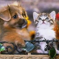 very cute animal babies
