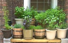 Devoid Of Culture And Indifferent To The Arts: Gardening: Fresh Veggies from your Patio
