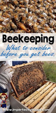 Beekeeping - what to consider BEFORE you get bees: A beehive (or two) is an excellent addition to a homestead, even in an urban area, as they don't take up much space. Bees not only provide honey, but also pollination services and beeswax. Beekeeping For Beginners, Raising Bees, Bee Boxes, Bee Farm, I Love Bees, Backyard Beekeeping, Bee Friendly, Hobby Farms, Small Farm