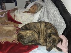 Sick woman lying in bed with her rescue dog