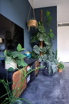 Living Room Plants, Living Room Lounge, Room With Plants, Arcade Game Room, Cosy House, Student Room, House Color Schemes, Gamer Room, Blue Rooms