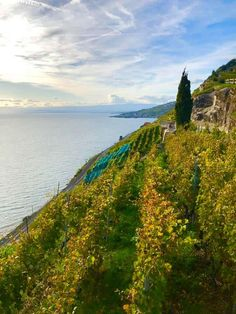 The Lavaux UNESCO World Heritage Vineyards in Vaud. A walk thrugh one of the most scenic areas of Switzerland with the terraced vineyards. Places To Travel, Places To Visit, Cultural Significance, Walking Routes, Lake Geneva, 11th Century, Going On Holiday, World Heritage Sites, See Photo