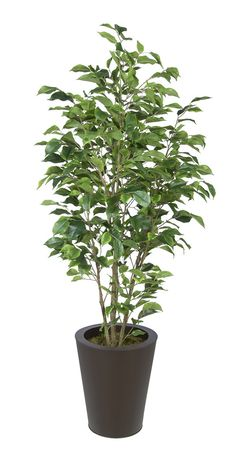 10 Simple and Modern Tips: Artificial Plants Decoration Green Walls artificial plants living room christmas trees.Artificial Plants Decoration Home. Artificial Indoor Plants, Artificial Turf, Artificial Flowers, Balcony Plants, Garden Plants, Outdoor Plants, Plants Indoor, Indoor Gardening, Ficus Tree Indoor