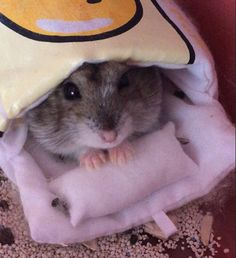dwarf hamster in his little sleeping bag