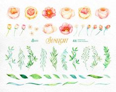 Sunlight: 46 Watercolor Elements popies roses by OctopusArtis