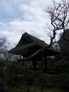 in Kamakura 03.01.2013 鎌倉・東慶寺 Kamakura, Trunks, Plants, Viajes, Drift Wood, Tree Trunks, Plant, Planets