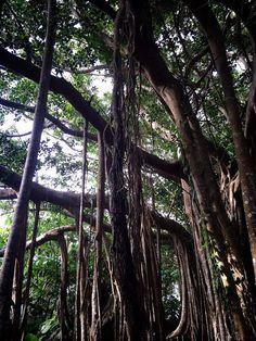 沖縄観光におすすめ!専門家が教える沖縄本島スポット20選   Travel.jp[たびねす]