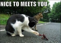 30 funny animal captions - part 2 (30 pics)