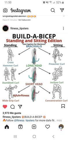 Concentration Curls, Preacher Curls, Hammer Curls, Biceps, Workout, Fitness, Workout Abs, I Like You, Work Out