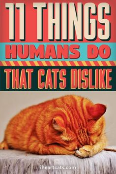 11 Things Humans Do That Cats Dislike - Pets - I Love Cats, Crazy Cats, Crazy Cat Lady, Cute Kittens, Cats And Kittens, Cats Meowing, Cat Kawaii, Cat Hacks, Cat Info