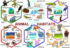 biology anchor charts | Understanding Life Systems: Habitats and Communities