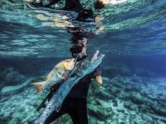 Fresh Barracuda and Fresh Snapper while Freediving and Spearfishing in Mexico.