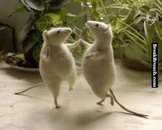 Two happy mouse dancing - http://breakbrunch.com/funny-picture-2959