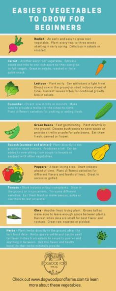 Easy to Grow Vegetables: Try these Vegetables in Your Garden - Garden Care, Garden Design and Gardening Supplies Easy Vegetables To Grow, Planting Vegetables, Organic Vegetables, Regrow Vegetables, Veggies, Home Grown Vegetables, Planting Seeds, Garden Care, Gardening Supplies