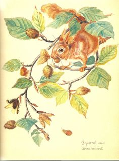 October - The Nature Notes of an Edwardian Lady - Edith Holden