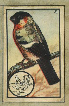 De Goudvink - van Zoologie - vintage collectable card