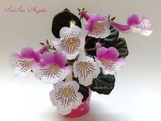 #SimSimAngelito #Gesneriad #GesneriadSociety #Sinningia #AVSA #IndoorPlant #Houseplant #AfricanVioletSocietyOfAmerica #flowers #bloom #flowerstagram #FlowersOfInstagram