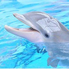 baby dolphin so cute ♥