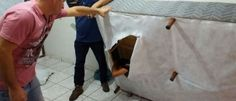 InfoNavWeb                       Informação, Notícias,Videos, Diversão, Games e Tecnologia.  : Polícia prende foragido da Justiça dentro de cama ...