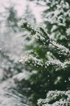 High Quality And Breath Taking Christmas Winter Wallpaper For Your Phone;