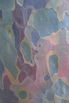 Pastel | Pastello | 淡色の | пастельный | Color | Texture | Pattern | Composition | Gum tree bark by artisanat, via Flickr