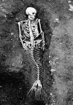 Is it a real mermaid skeleton in the photo? But it sure does look like a real mermaid skeleton. But to me it really does look like a real mermaid. Real Mermaids, Fantasy Mermaids, Are Mermaids Real Proof, Do Mermaids Exist, Creepy, Scary, Mermaid Skeleton, Bizarre, Ancient Aliens
