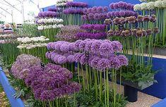 20 Essential Flowering Perennials for your Garden