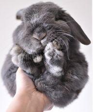 Sweet sweet bunny