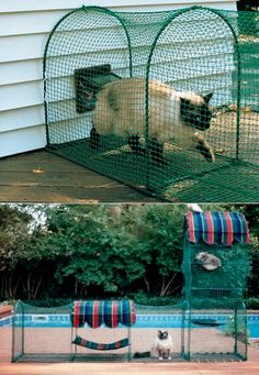 Outdoor cat enclosures offer the benefit of fresh air, the ability to check out the activity in the backyard and a different place to nap - and they're promoted by The Humane Society of the US! Kittywalk's products help your cat get the benefits of the great outdoors risk-free. #cats #pets #cattoys