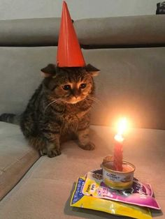 Celebrating your birthday in april 2020 - your daily dose of funny cats - cute kittens - pet memes - pets in clothes - kitty breeds - sweet animal pictures - perfect photos for cat moms Cute Kittens, Cute Baby Cats, Cute Little Animals, Cute Funny Animals, Cats And Kittens, Cute Babies, Funny Cats, Cat Icon, Sad Cat