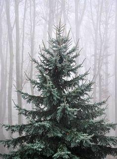 A natural unshaped tree