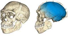 El hallazgo de restos de Homo sapiens de hace 300.000 años retrasa en 100.000 años el origen del hombre moderno
