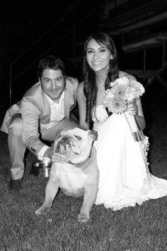 Bulldog in a wedding
