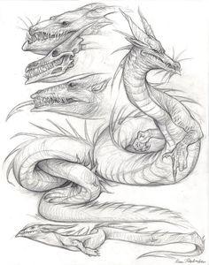 Anatomy of the Western Dragon by KatePfeilschiefter on DeviantArt Dragon Head, Dragon Art, Pen Sketch, Art Sketches, Realistic Dragon Drawing, Dragon Drawings, Tolkien, Dragons, Dragon Sketch