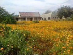 Jansenville
