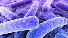 Staph infections are one of the most pervasive and annoying bacterial infections faced by hospitals every year. It infects half a million people in the US every year, with symptoms ranging from skin infections to heart problems -- and worse, some strains (commonly known as MRSA) have evolved to resist common antibiotics.