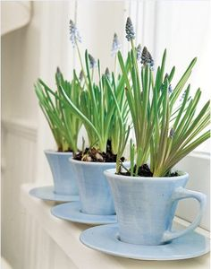Blue bells and tea cups. Super cute but I'd put a drainage hole in the bottom of the mug.