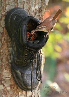 Boot birdhouse  .... simply nail it to the trunk of a tree (up high, away from animals) or nail it to a piece of wood, then affix to the tree or a high fence/wall.  bobi sez:  You might want to fill it with Baking Soda first and let it sit for a couple of days, unless you want to attract the Yellow-Bellied-Stink-Sniffer ;^)  Dump Soda (great for a gentle abrasive, or in Kitty's Litter)  Stuff in some t-shirt shreds  Let Nature happen