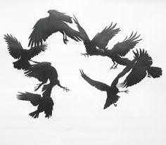 crow - Google Search