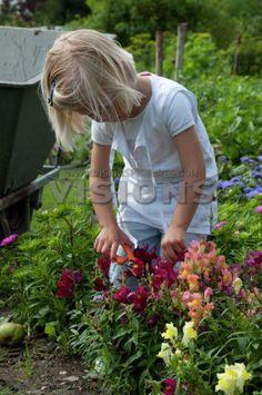 Knip de bloemen en zet ze in een vaasje