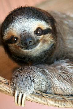 I know Sloth is supposed to be a deadly sin but these guys are so pure & sweet!